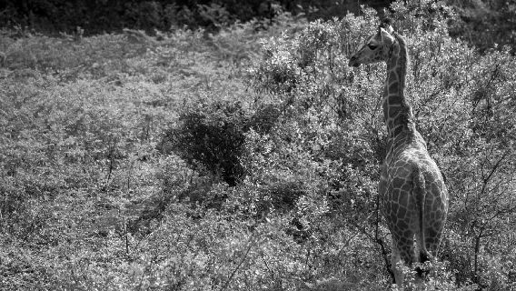 Schutz vor Kratzer//Glasfolie Panzerglas Folie Displayschutzfolie Anti-Reflex MATT Entspiegelnd Schutzfolie 4 St/ück SWIDO Displayschutz f/ür Nikon D7200 Hoher H/ärtegrad